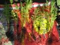 Les carottes jeunes! Potage-Toit Etienne Etterbeek - avril 2013