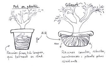 Pourquoi Des Pots En Geotextile Potage Toit